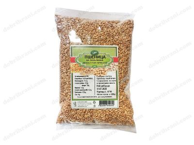 wheat germination 500g